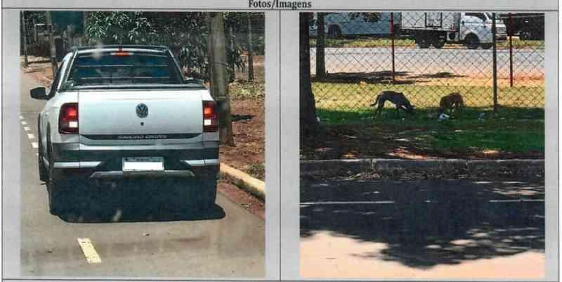 Mulher é multada em R$ 4 mil por abandonar cães em Maringá, PR