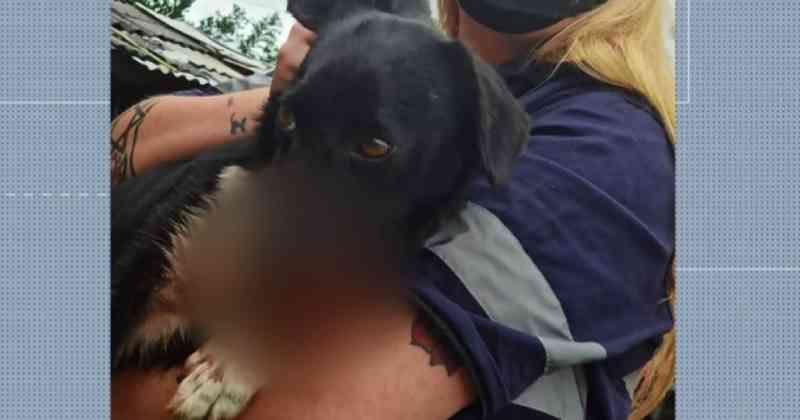 Morre cadela resgatada em Piraquara (PR) com ferimentos na boca causados por rojão