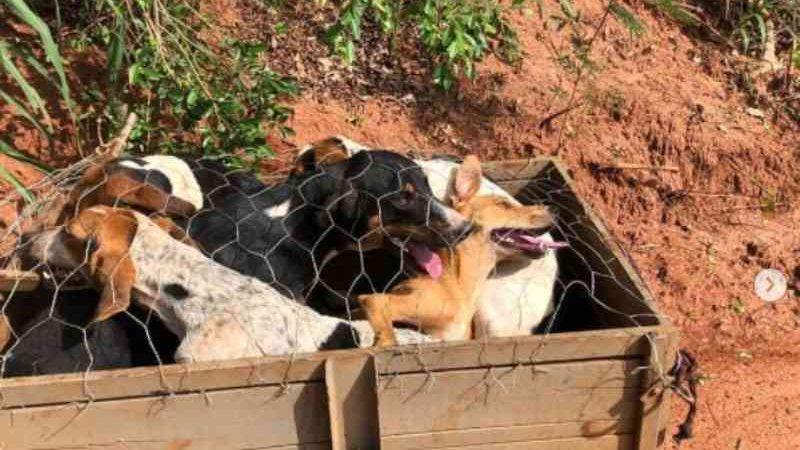 Polícia ambiental flagra motociclista transportando 6 cães em carretinha, em São Jorge do Patrocínio, PR