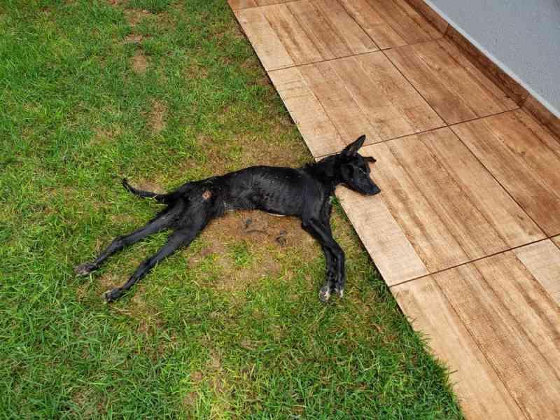 Após denúncia, jovem é preso suspeito de maus-tratos a cachorro em Toledo (PR), diz polícia