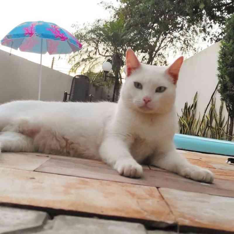 Tutor denuncia que gato foi envenenado na avenida Rio de Janeiro, em Umuarama, PR