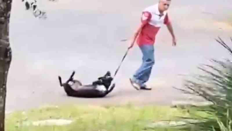 Casal que aparece em vídeo agredindo cão em Colombo (PR) é identificado e animal resgatado; assista