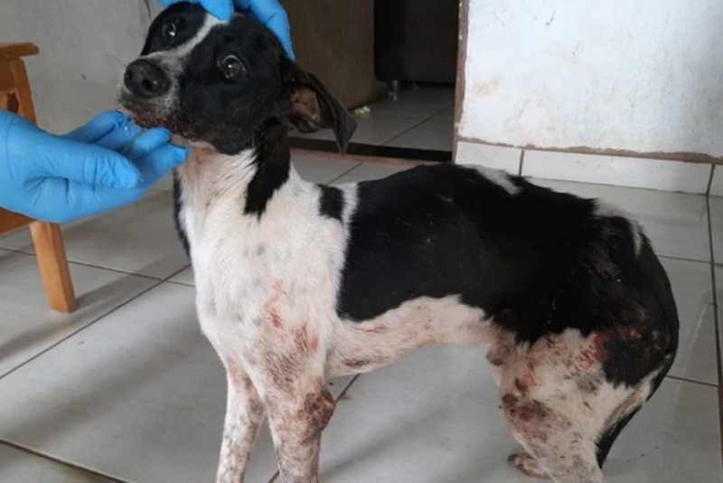 Homem é preso por manter cão em situação de maus-tratos em Paranavaí, PR