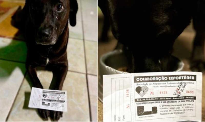 ONG lança rifa para adquirir aparelho ortodôntico para tratar animais em Umuarama, PR