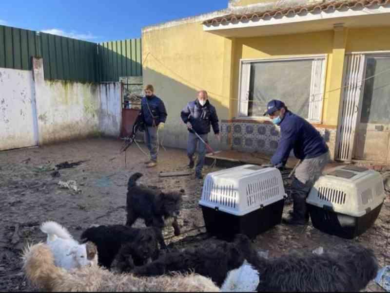 Chocante. Polícia resgata 29 cães de casa em Portugal. Tutor ameaçava de morte os vizinhos