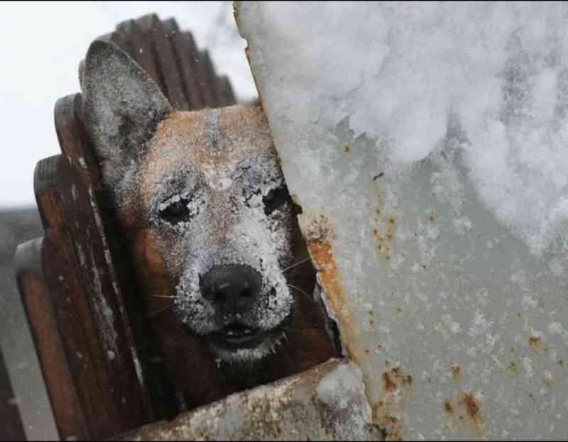 Imagem arrepiante de cão em sofrimento com o frio extremo em Portugal: 'Não os deixe ao frio'
