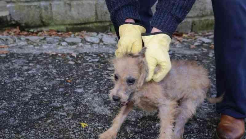Portugal: GNR resgatou 25 cães mantidos sem condições de higiene em Seia