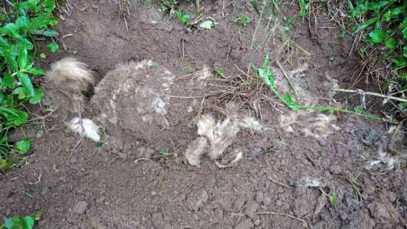 Sumiço de cachorro leva à descoberta de 'sítio macabro' em Nova Friburgo, RJ