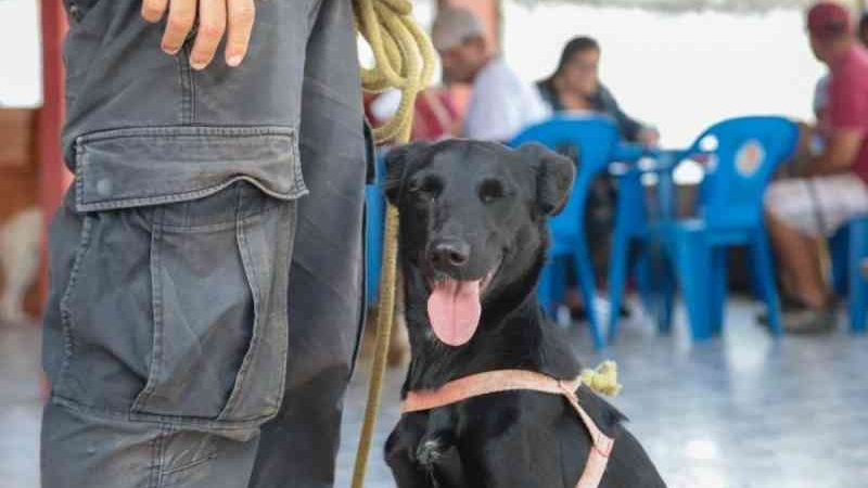 Proteção Animal abre inscrições para castração de cães e gatos em Maricá, RJ