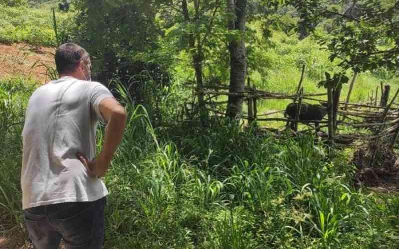 Cobea flagra animais em condições precárias em sítio de Itaipava, em Petrópolis, RJ