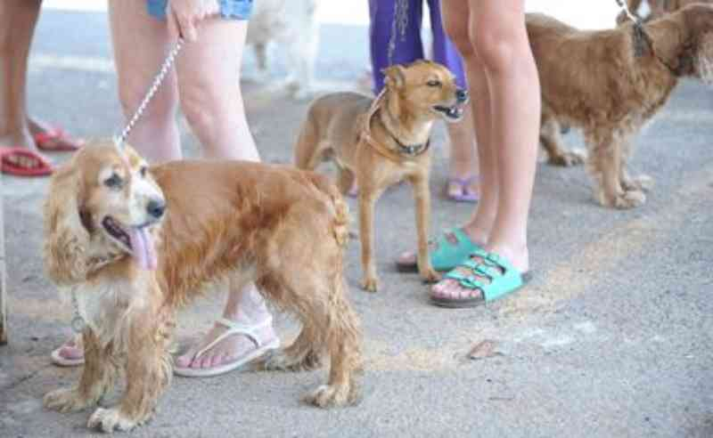 Coordenadoria de Bem-Estar Animal é criada em São Pedro da Aldeia, RJ