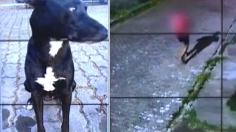 Imagens de câmeras de segurança mostram suspeito passando no momento do crime. Cachorro de rua era cuidado pelos moradores do Portinho, em Cabo Frio — Foto: Reprodução Inter TV