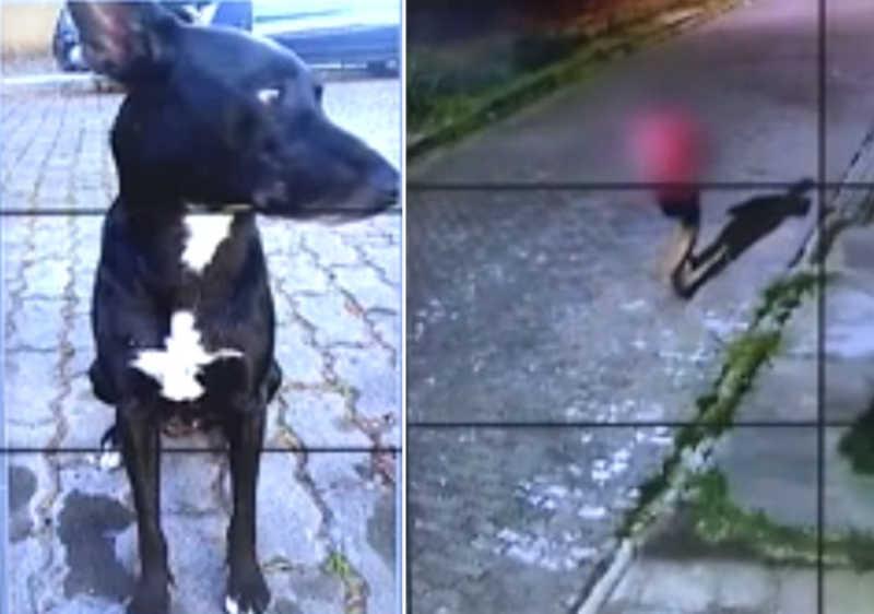 Cachorro de rua é assassinado a tiros no bairro Novo Portinho, em Cabo Frio (RJ), e revolta moradores