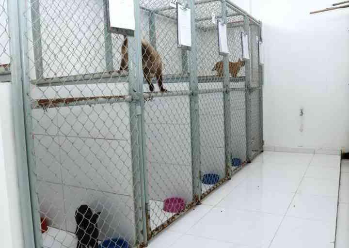 Centro de Zoonoses resgata animais abandonados em órgãos públicos de Boa Vista, em Roraima