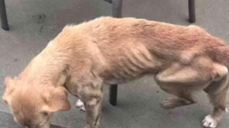 Deixadas com fome, cadelas se atacam, matam pato para se alimentar, são resgatadas em RO