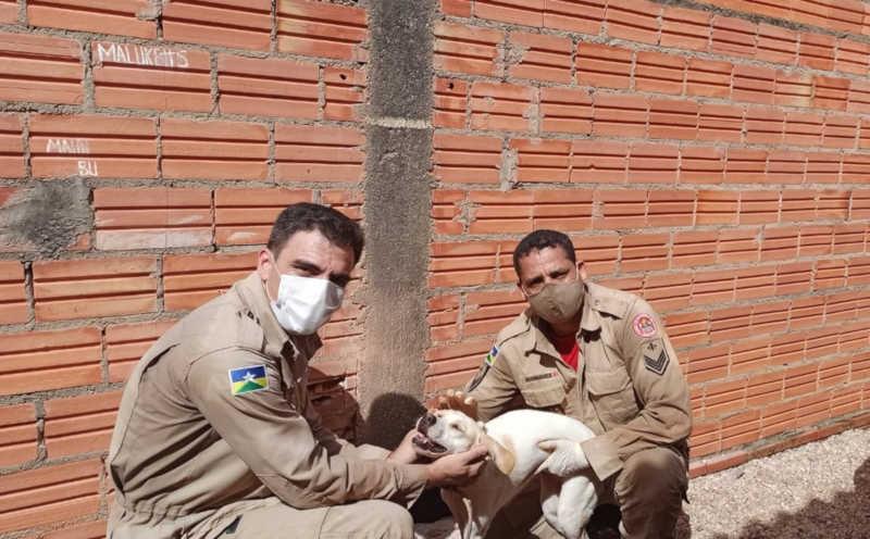 Laika com militares após ser resgatada em Pimenta Bueno — Foto: Pimenta Virtual/Reprodução
