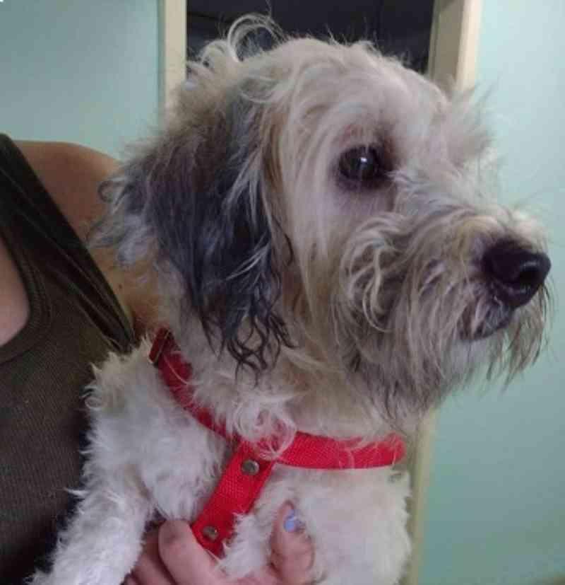 Abandonado para morrer, cão é resgatado após oito meses trancado em apartamento em Canoas, RS