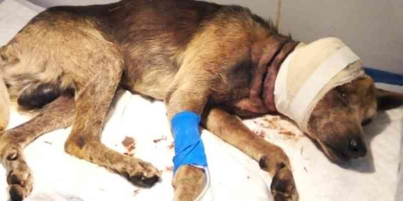 Jovem é preso pela Brigada Militar por maus-tratos contra cão em Nova Santa Rita, RS