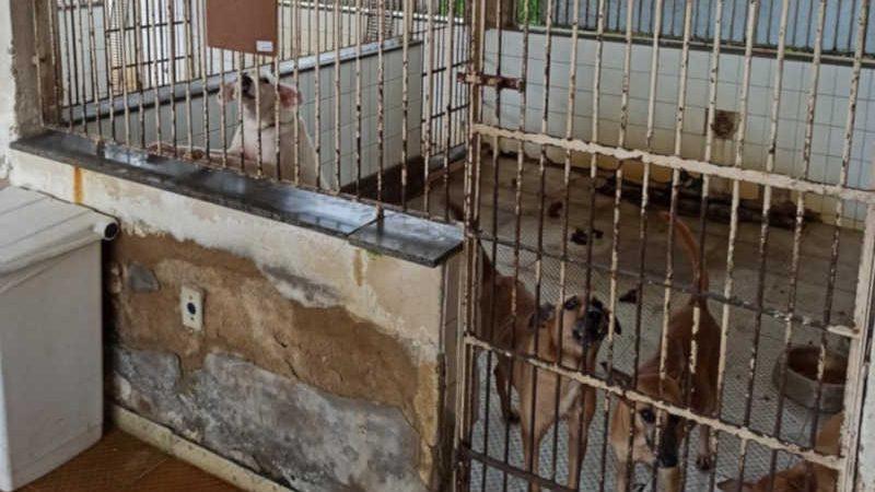 'Canil da Prefeirura Campos (RJ) está totalmente abandonado', afirma novo diretor do CCZ