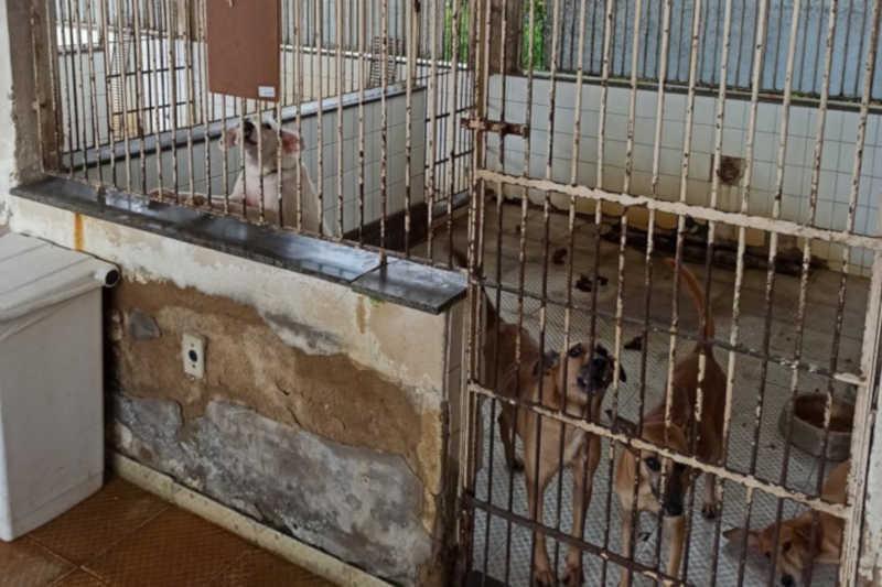 'Canil da Prefeitura Campos (RJ) está totalmente abandonado', afirma novo diretor do CCZ