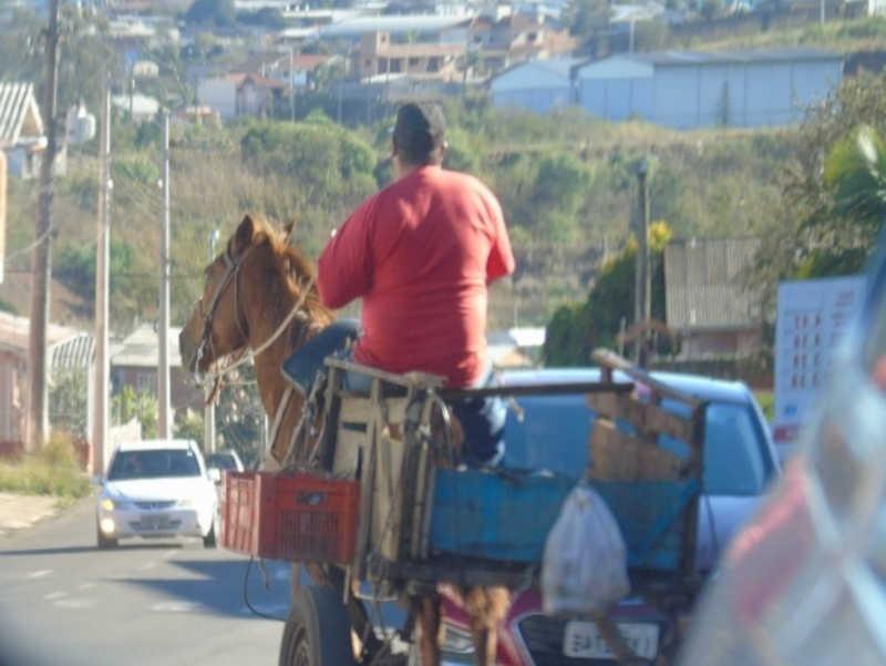 Projeto prevê proibição de veículos de tração animal em Carazinho, RS