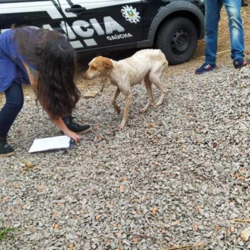 Cães em situação de maus-tratos são resgatados em Nova Prata, RS