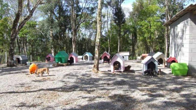 Emenda parlamentar destina verba para castração e medicação de animais em Veranópolis, RS