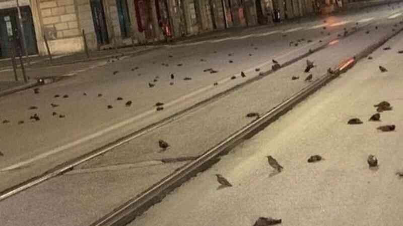 Centenas de estorninhos mortos em Roma após fogos de artifício