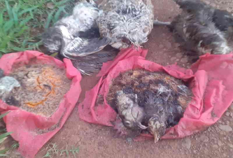 Moradores voltam a registrar sacrifício de animais para rituais em Xanxerê, SC