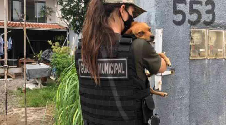 Guarda Ambiental tem guarnição para combater maus-tratos contra animais em Balneário Camboriú, SC