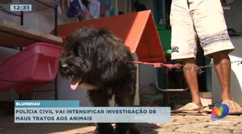 Polícia cria grupo para combater maus-tratos a animais em Blumenau (SC); saiba com denunciar