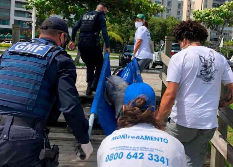 Golfinho achado em Florianópolis não tem causa da morte identificada em necropsia