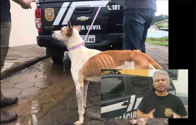 Cão extremamente magro é resgatado depois de denúncia de maus-tratos em Gaspar, SC