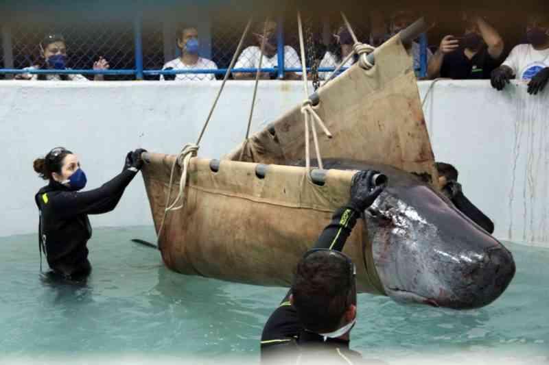 De baleias a tartarugas: 6,5 mil animais marinhos foram resgatados no litoral de SC