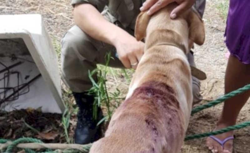 Cachorro em situação de maus-tratos é resgatado em Porto Belo, SC