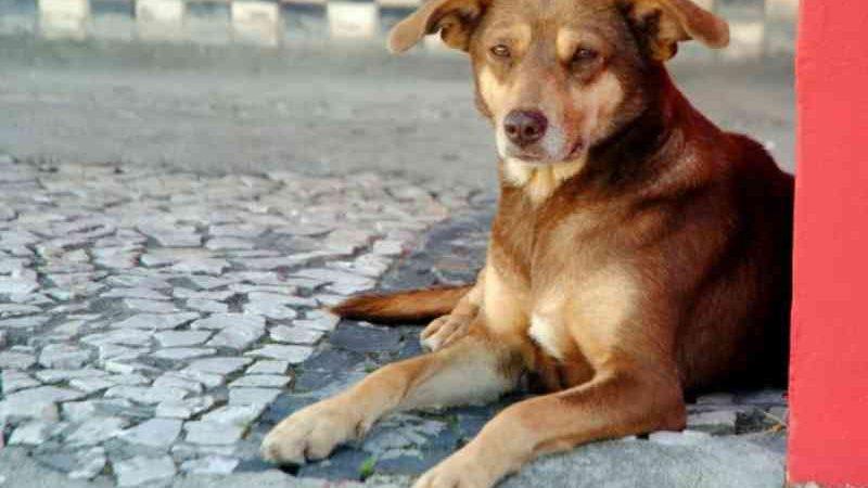 Lei em Santa Catarina autoriza que animais sejam alimentados nas ruas