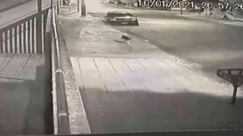 Cachorro é abandonado e corre atrás de veículo do tutor