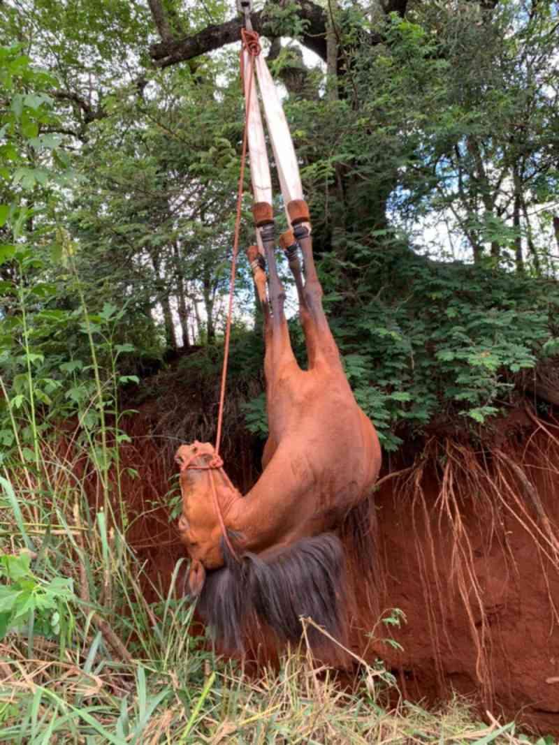 Cavalo é resgatado de buraco com 4 metros de profundidade em Botucatu, SP