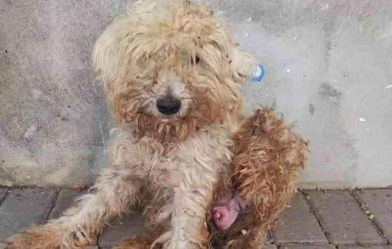 Zoofilia: cachorra é violentada em Botucatu (SP); laudo confirmou o crime