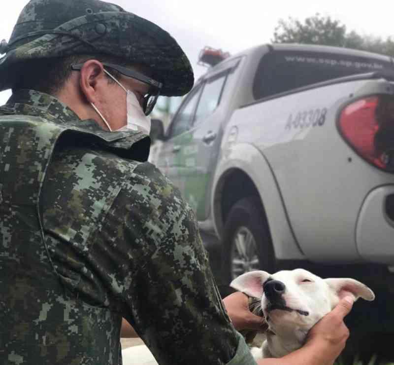 Polícia Ambiental multa morador de Caraguatatuba (SP) em R$ 9 mil por maus-tratos a animais