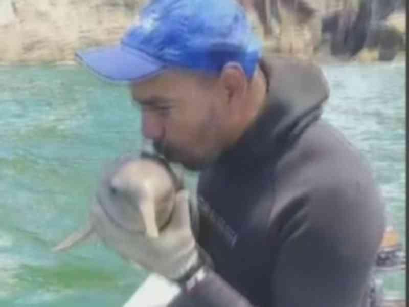 Vídeo: pescador viraliza ao salvar golfinho preso em rede: 'Ganhei o ano'