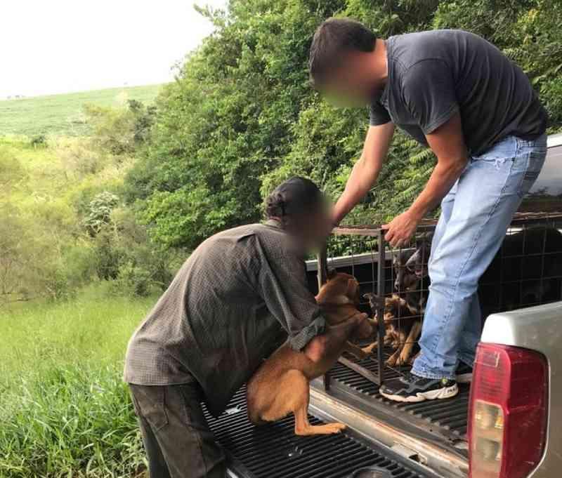 Mais de 40 cachorros são recolhidos de imóvel em Itapeva, SP