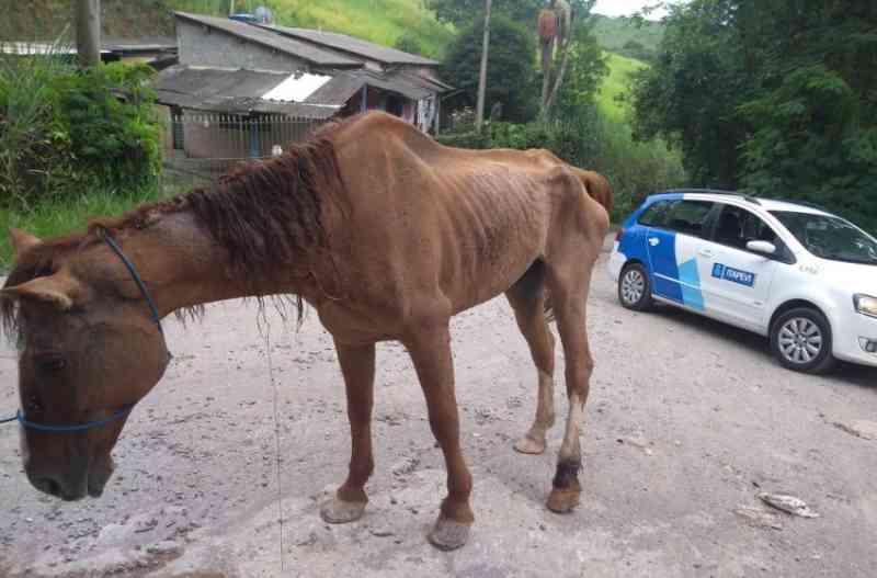 Cavalo abandonado e com sinais de maus-tratos é resgatado em Itapevi, SP