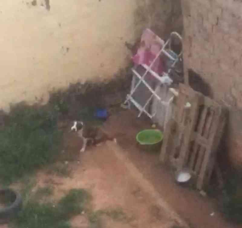 Jovem é preso em flagrante por deixar cão acorrentado na chuva e sem comida em Itu, SP