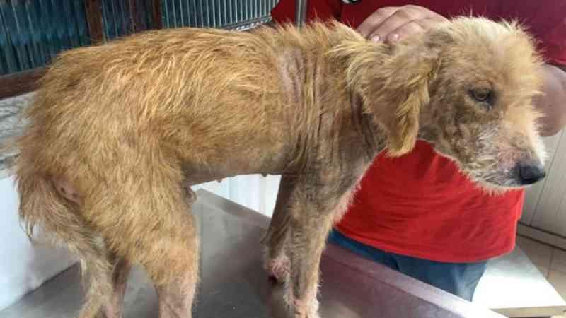 Mulher é presa por maus-tratos a animais em Itu, SP