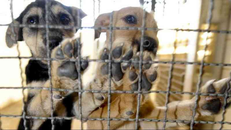 Denúncia de maus-tratos a animais cresce 235% em Jaguariúna, SP
