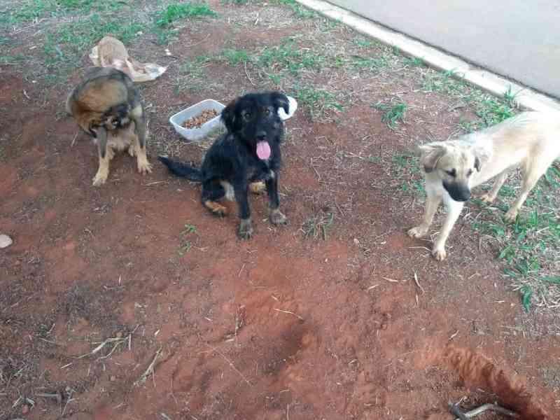 Aumento dos casos de abandono de animais durante a pandemia preocupa ONG de Jundiaí: 'Não é descarte'