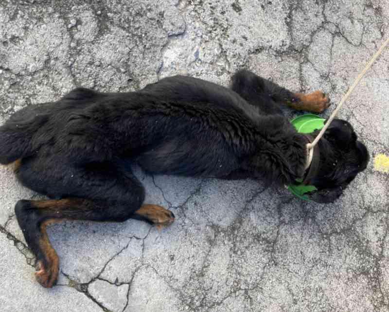 Após denúncia no 156, Debea resgata cães com maus-tratos em Jundiaí, SP
