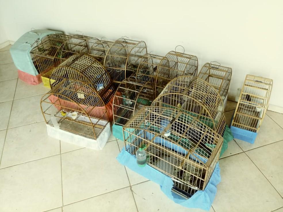 Polícia Ambiental multa homem em R$ 10 mil por manter 21 aves silvestres em cativeiro em Manduri, SP