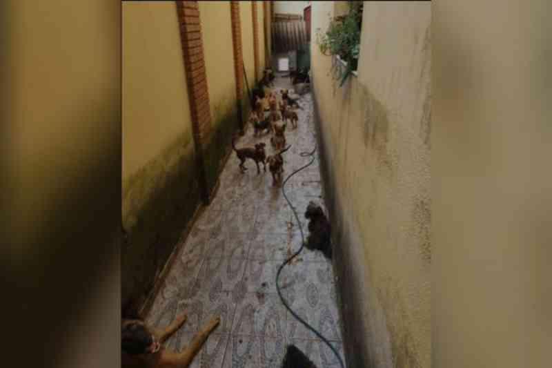 Cães que comiam fezes e resto de ração são resgatados e homem é preso em Peruíbe, SP